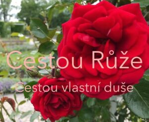 Cestou růže
